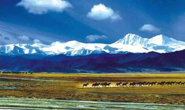 新疆旅游包车,新疆旅游
