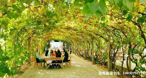 阳关镇葡萄架下午餐